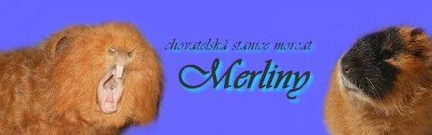 Merliny
